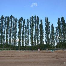 sportovni_den_s_konmi2012_12